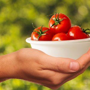 asesoria en manejo de alimentos